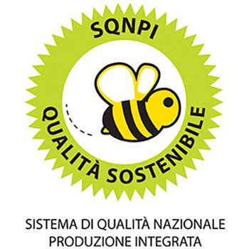 logo sqnpi